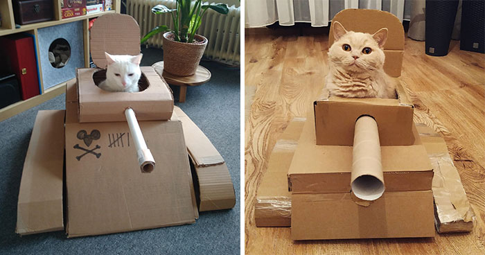 People Are So Bored During Quarantine That They're Building Cardboard Tanks For Their Cats (30 Pics)