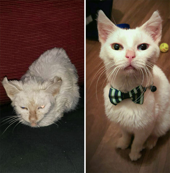 Pugsley The Rescue Cat Before And After. It's Amazing What A Little Love And Some Strong Antibiotics Can Do