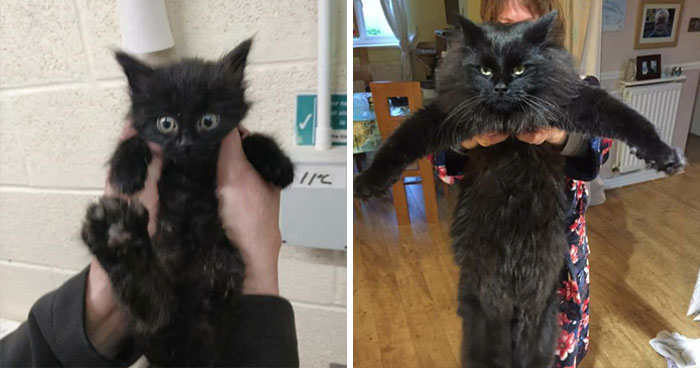People Are Sharing Before And After Adoption Pictures Of Their Cats And It's Heartwarming (35 Pics)