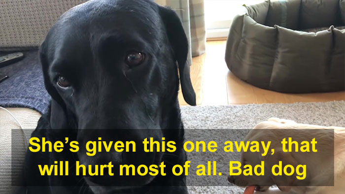 People Are Laughing At This Sports Broadcaster Commenting On His Dogs Fighting Over A Chew Toy