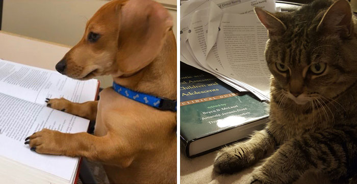 Professor Asks Her Students To Show Their Dogs Doing Classwork, 30 People Send Her Their Photos