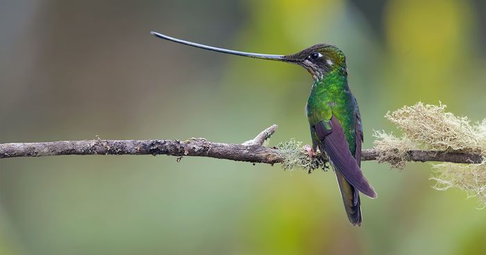 39 Photographs Of Beautiful And Colorful Birds I Captured In The Rainforest Of Colombia