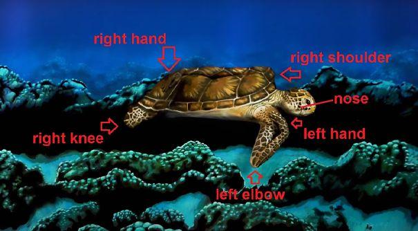 turtle-5ea30e29e9e14.jpg