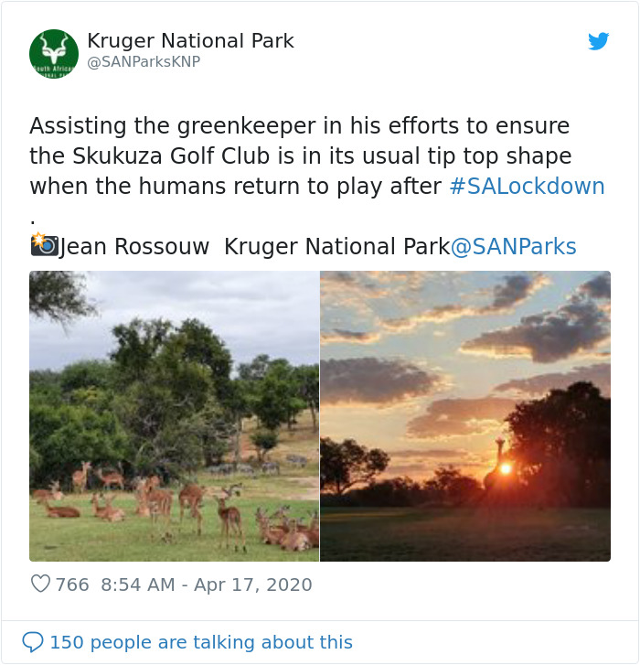 Wild Animals Invade Skukuza Golf Club In South Africa
