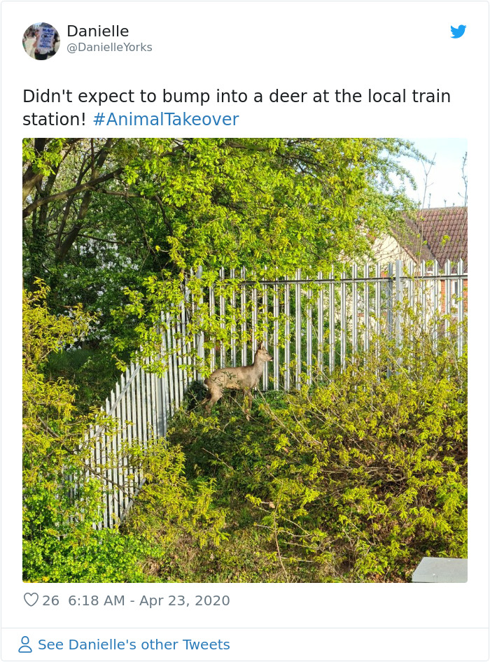 Deer At The Local Train Station In Ireland