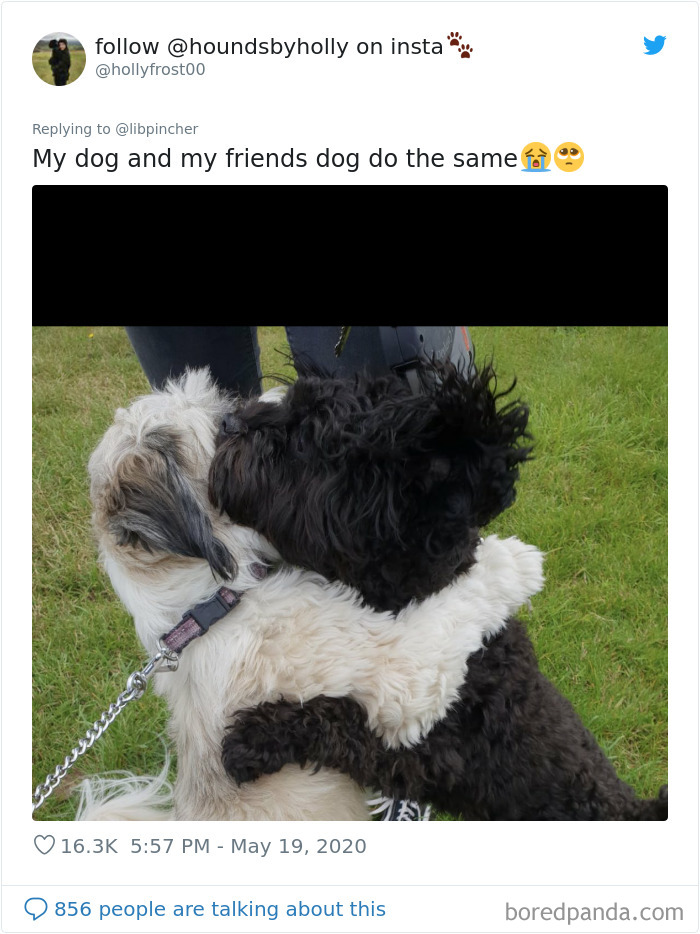 Dogs From The Same Litter Recognize Each Other When They Accidentally Meet On The Street