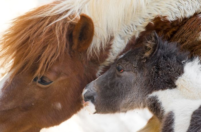 15 Years I Photographed Motherly Love Across The Animal Kingdom