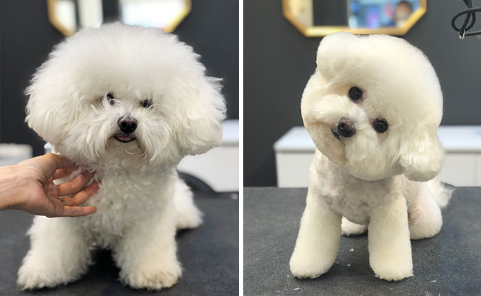 31 Dogs That Look Almost Unrecognizable After Seeing These Groomers