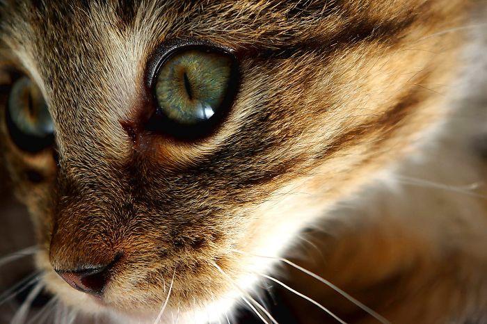 The Beautiful Kitten