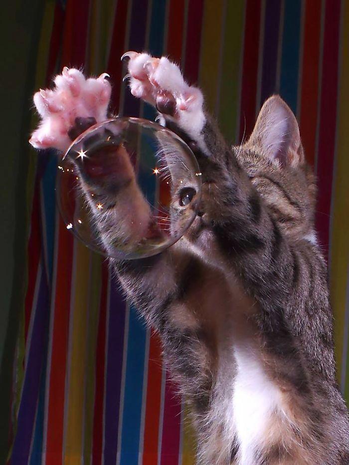 The Magic Kitten