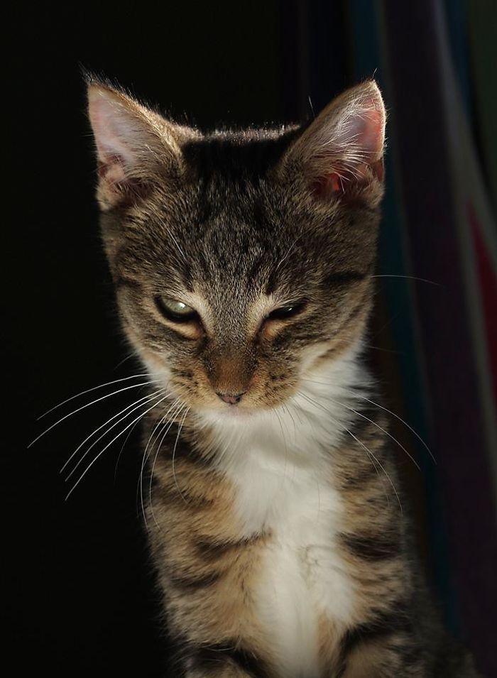 The Scheming Kitten