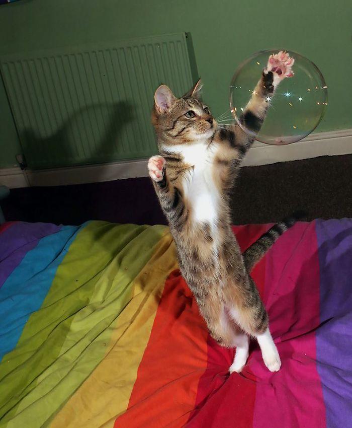 The Juggling Kitten