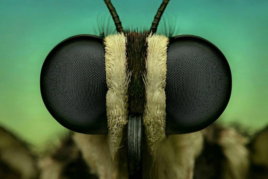Kelebek Yüzü