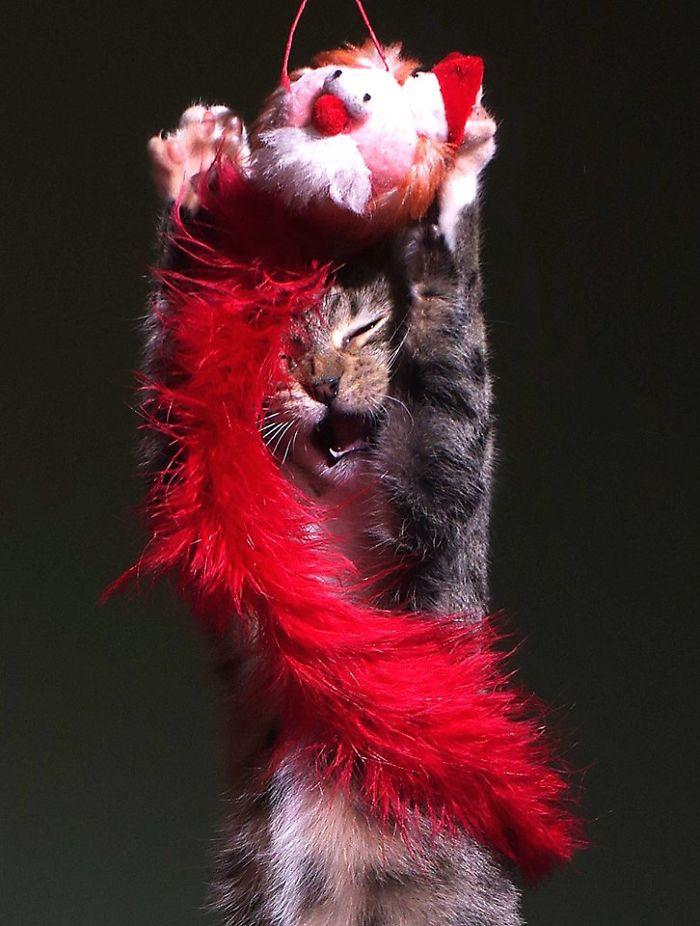 The Happy Kitten
