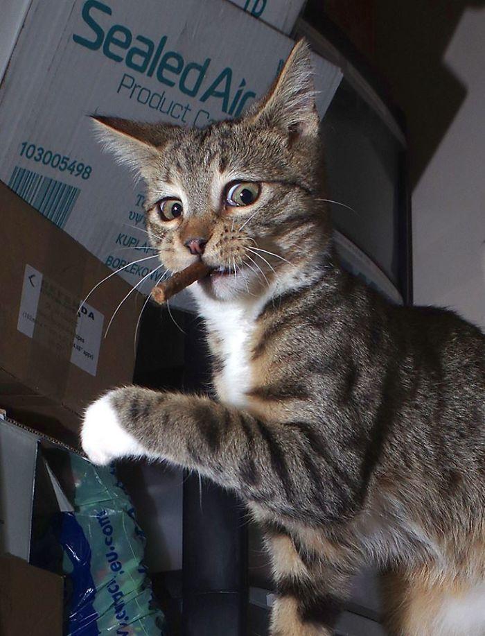 The Expressive Kitten