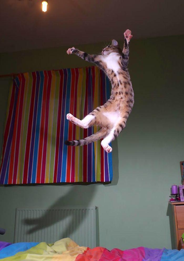 The Jumping Kitten