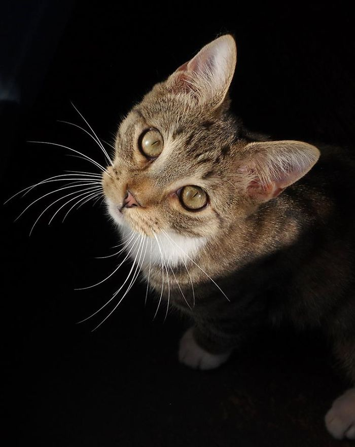 The Cute Kitten