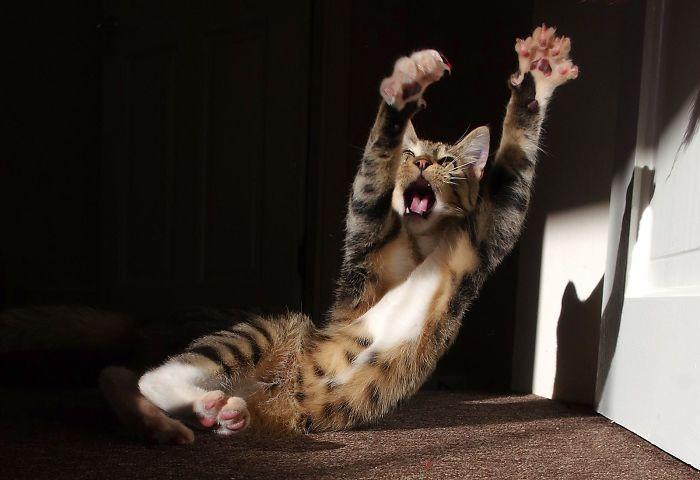 The Overdramatic Kitten