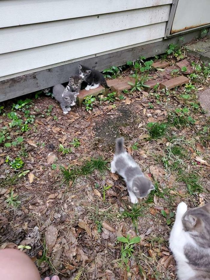 stray cat and her kittens