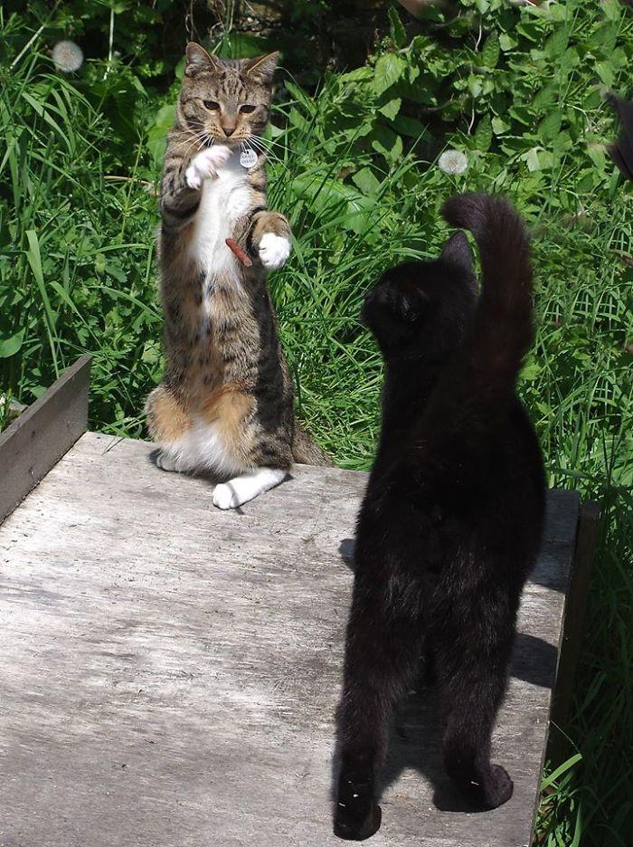 The Kung-Fu Kitten