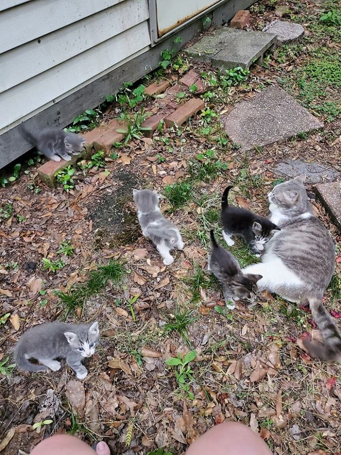 Stray Cat Brings The Woman Who's Been Feeding Her For A Couple Of Days To Meet Her Babies