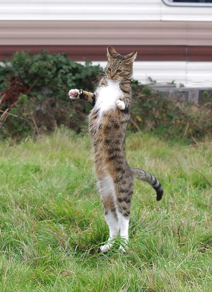 The Stretchy Cat