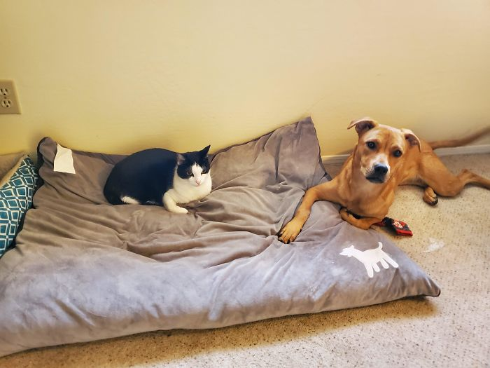 """How They """"Share"""" The Dog's Bed"""