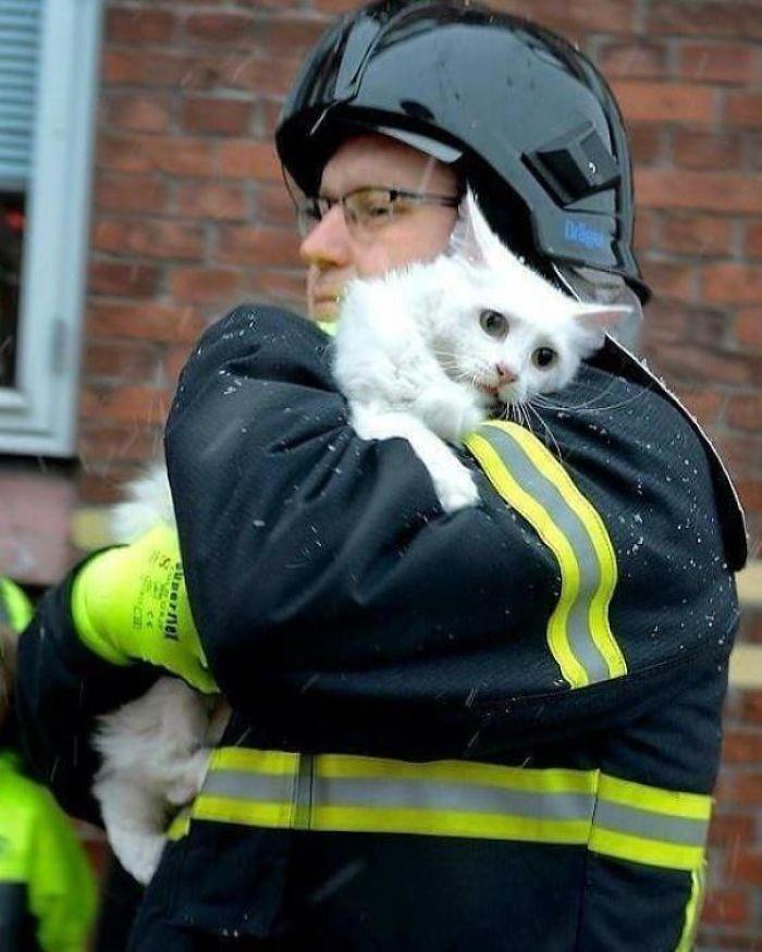 Fireman Rescues A Cat