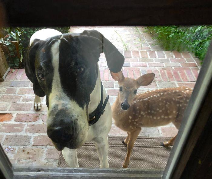 """Mirando Por La Puerta De Entrada. """"Hice Un Nuevo Amigo, Por Favor, ¿Puedo Quedarme Con Él?"""""""