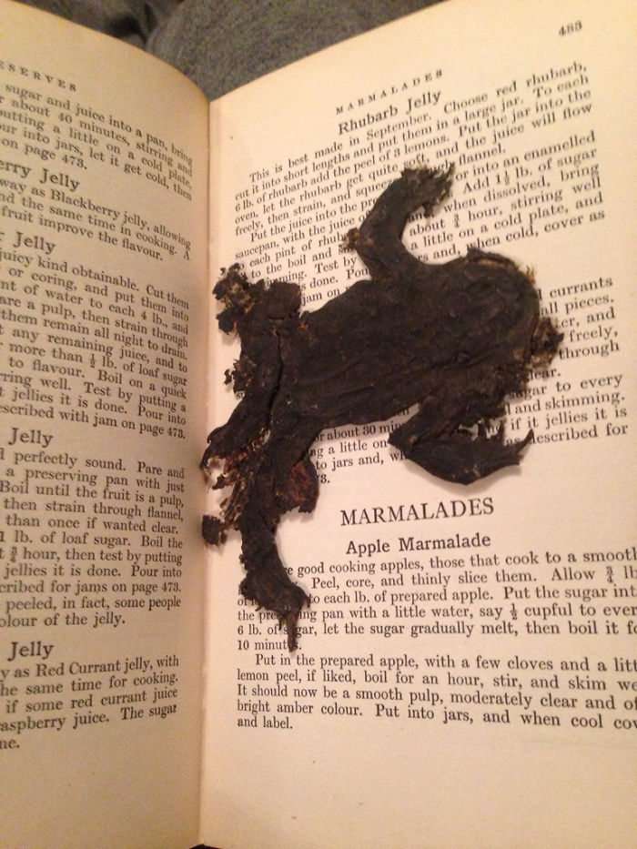 Looking Through An Old Cookery Book I Just Found And There's A Squashed Frog As A Bookmark