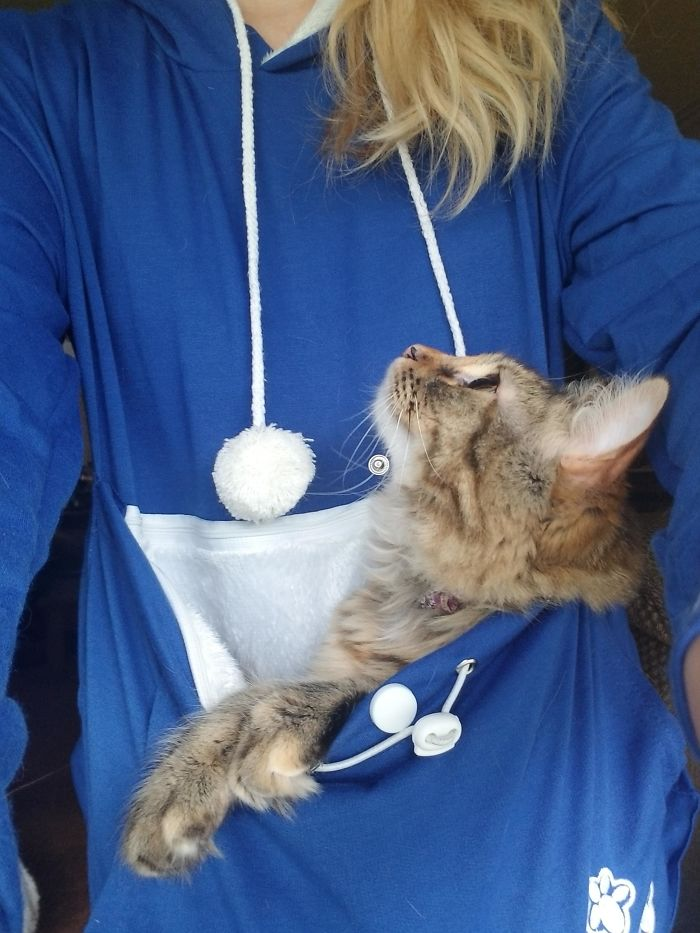 """My Cat Never Leaves My Side. Someone Gave Me A Hoodie With A """"Cat Pouch"""" As A Gag Gift. She Rides Around In It Staring At My Face"""