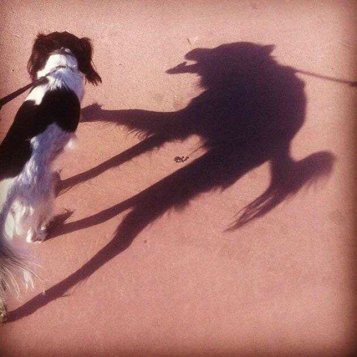 This Dog's Shadow