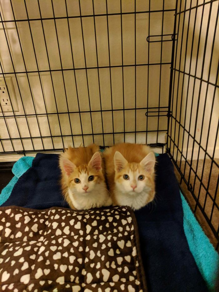 Just Adopted These Two Loaves.. Meet Quinn And Kit!