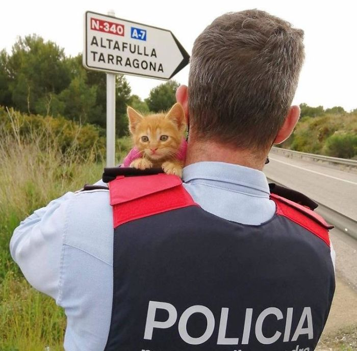 Two Catalan Police Officers Found This Kitten With Two Dead Sibling In A Bush, While Doing A Road Control. They Rescued The Kitten And One Of The Police Officers Addopted The Little Buddy