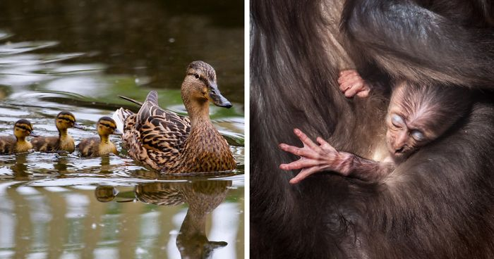 I Photograph The Loving Bond Between Mothers And Their Children Among Animals (34 Pics)