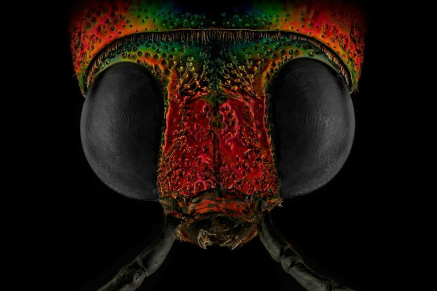 Mücevher Böceği