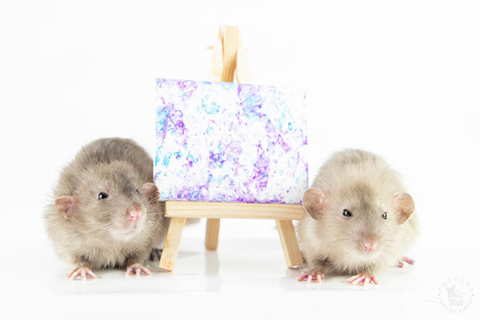 These Adorable Rats Create Miniature Paintings And Their Work Is Sold Out