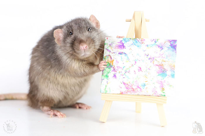 Rat Art Work