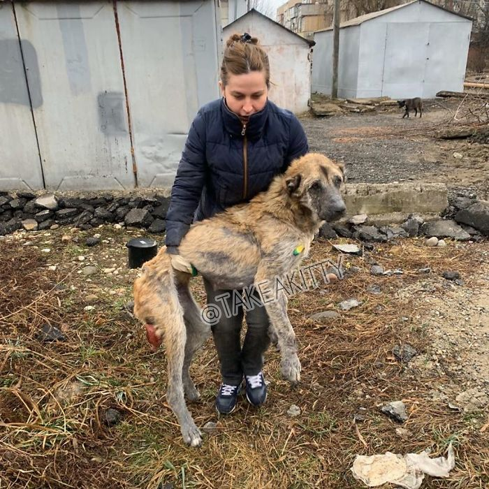 People Find A Dog Left For Dead By Breeders With Her Uterus Hanging Out