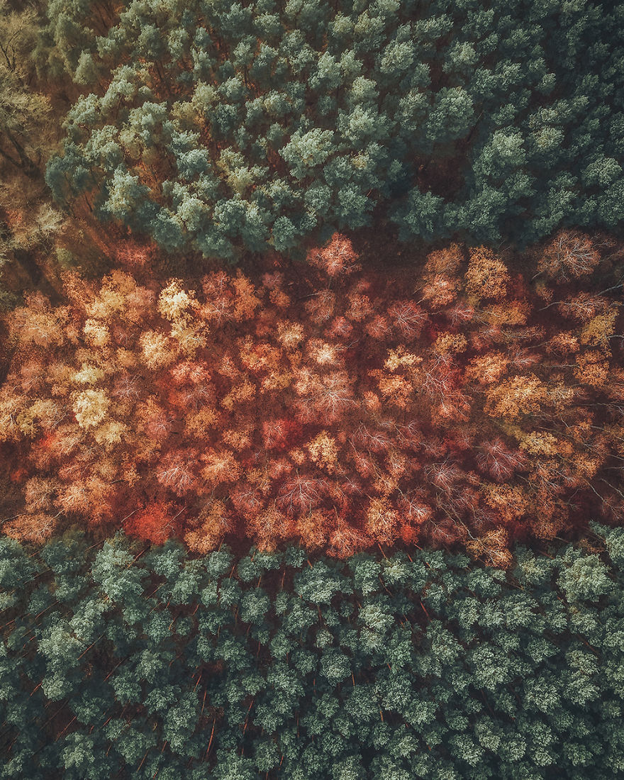 Deciduous And Coniferous Forest In Autumn (Poland)