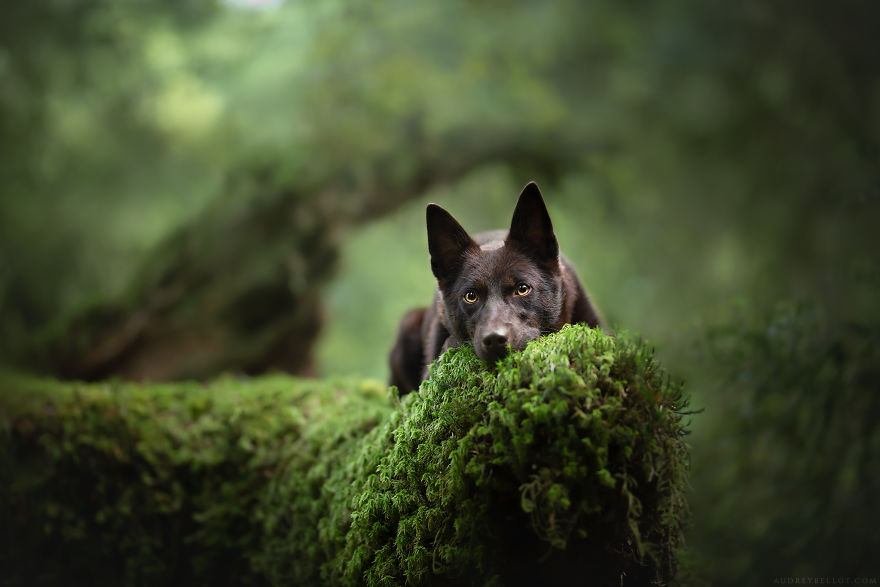 I Photograph Captivating Dog Portraits In Magical Forests And Unbelievable Places