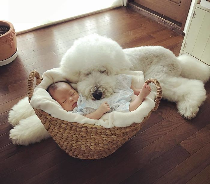 Child-Poodle-Dog-Friendship-Tamanegi-Qoo-Riku