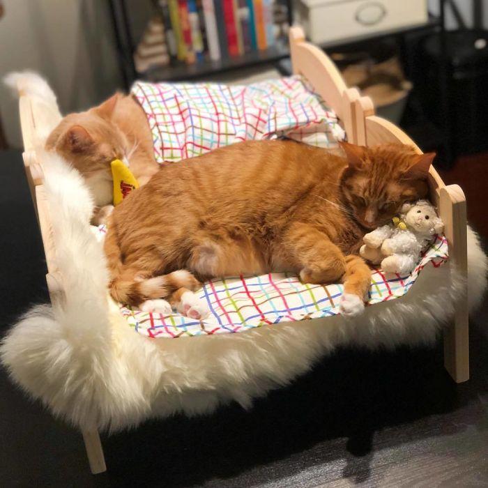 Cozy Co-Sleeping