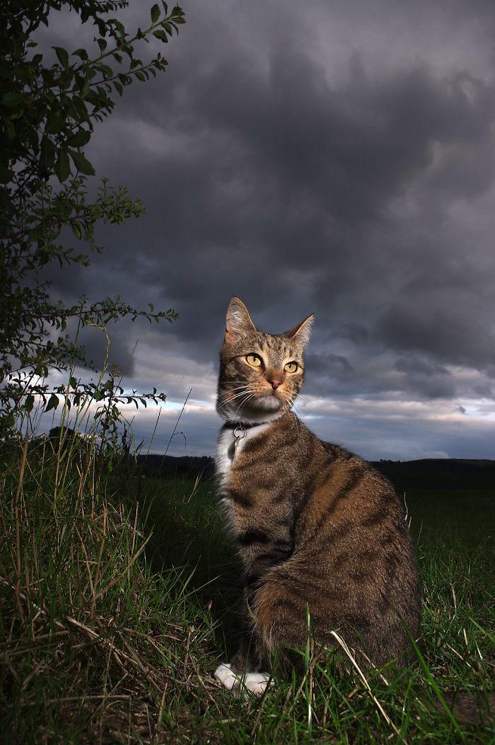 The Storm Cat