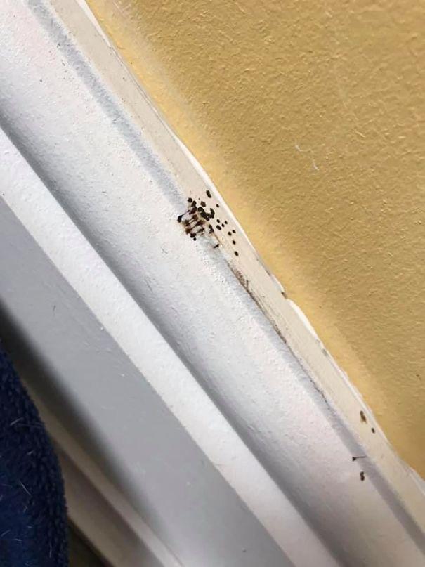 SPIDER-POOP-5eb6499eed1e6.jpg