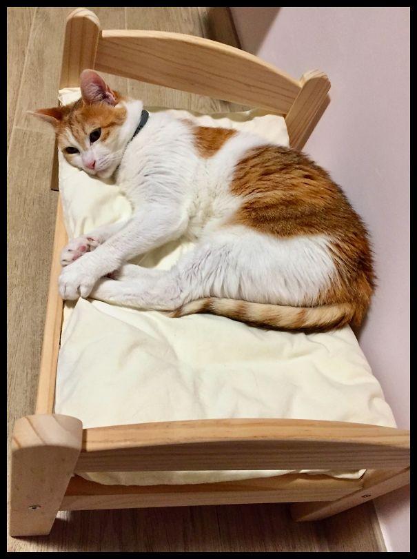 Sufi-Ikea-Bed-5eb9641f615db.jpg