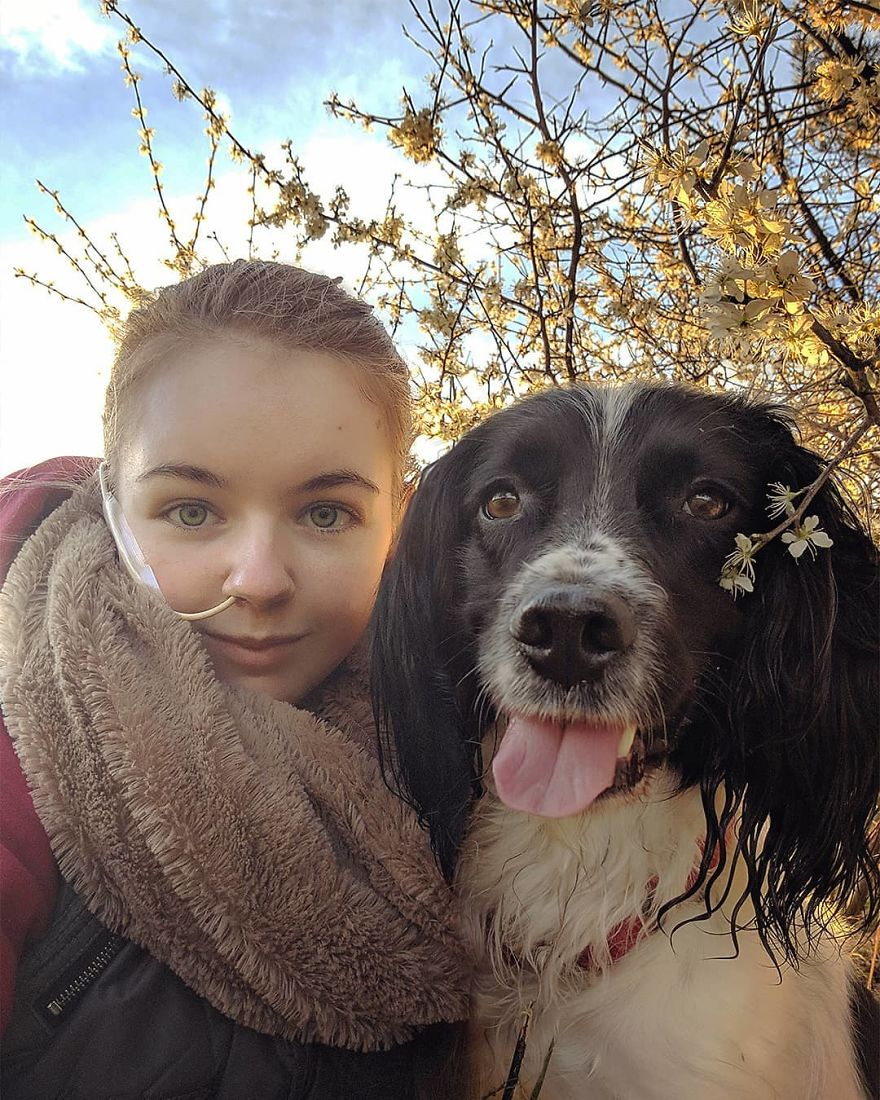 A Girl With A Disability Has The Most Adorable Helper - A Springer Spaniel Named Ted (17 Pics)