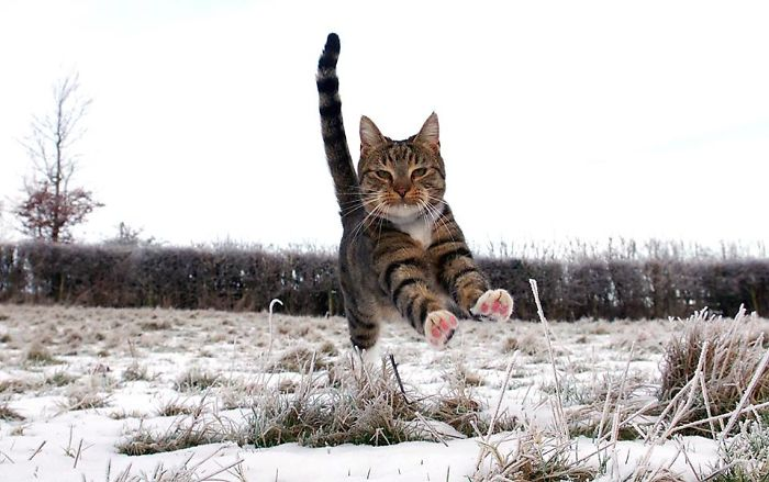 The Bouncing Cat