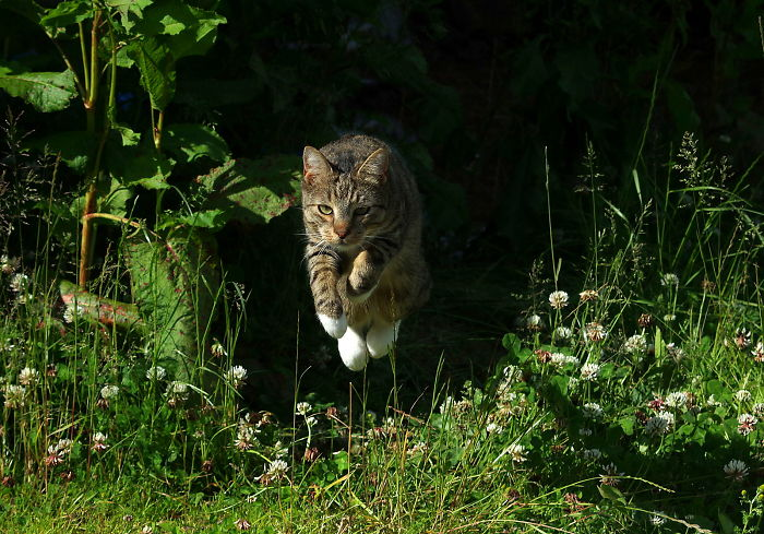 The Leaping Cat