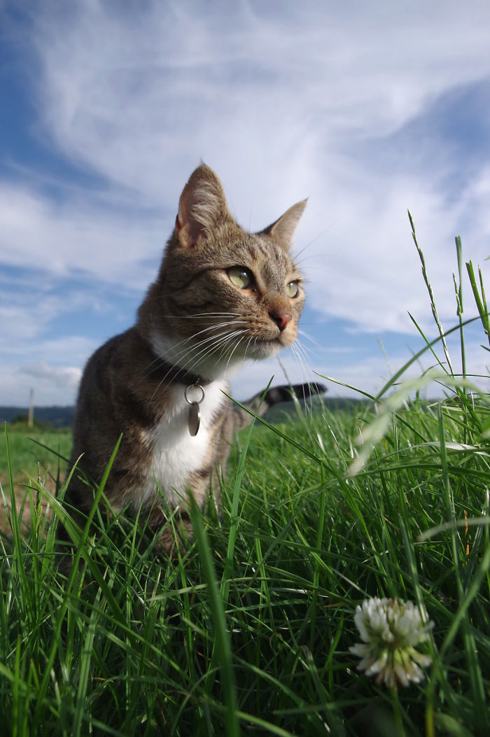The Pretty Cat